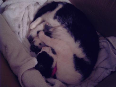 kittens-small.jpg