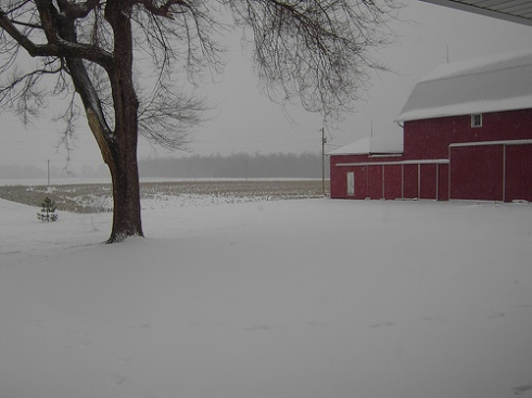 snow-dec-07.jpg