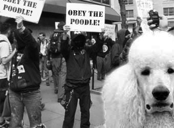 poodle_protest1.jpg