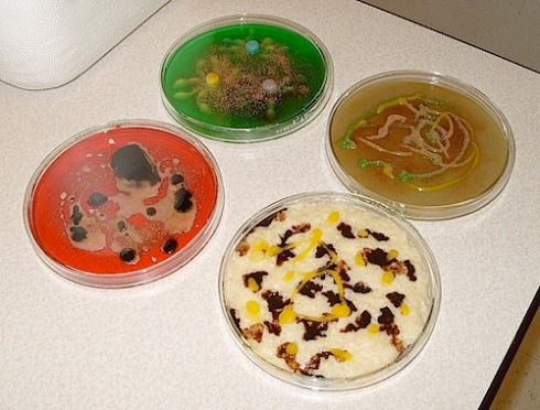 petri-desserts
